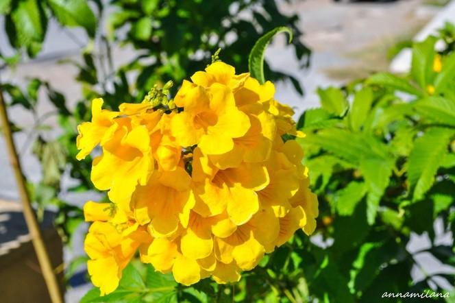 Цветы кипра фото и названия